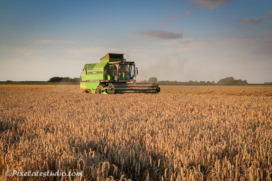 tarwe oogst op het platte land in Zeeland