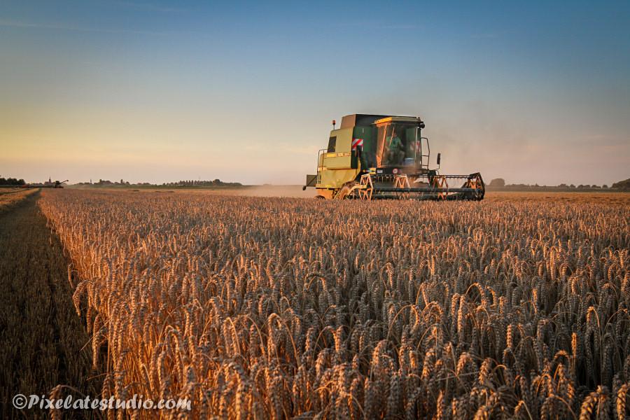 foto van de tarwe oogst 2017