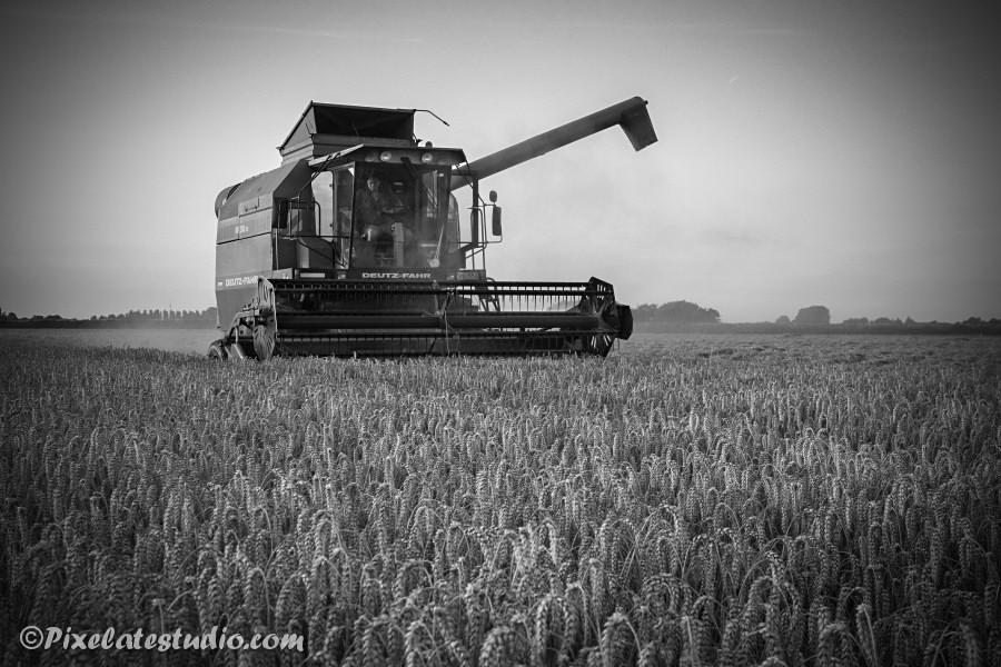 Zwart wit foto van de tarwe oogst in Zeeland