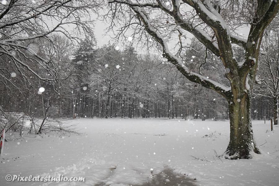 Bos met besneeuwde bomen, sneeuwfoto