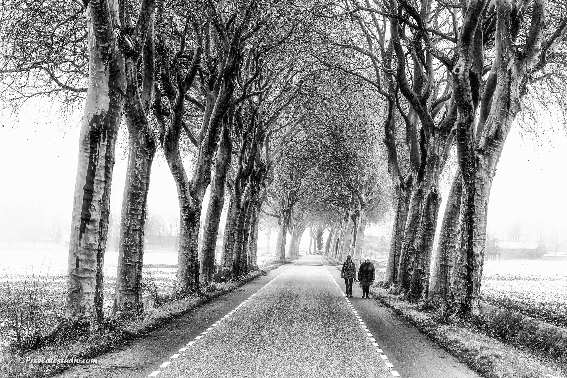 Rij met hoge bomen, weg met hoge bomen met twee wandelaars