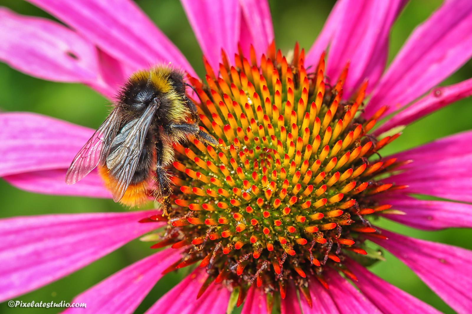 mooie foto van een kleurige bloem met bij