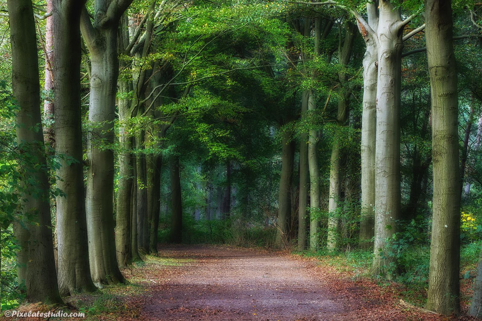 Mooie natuurfoto van een Bos