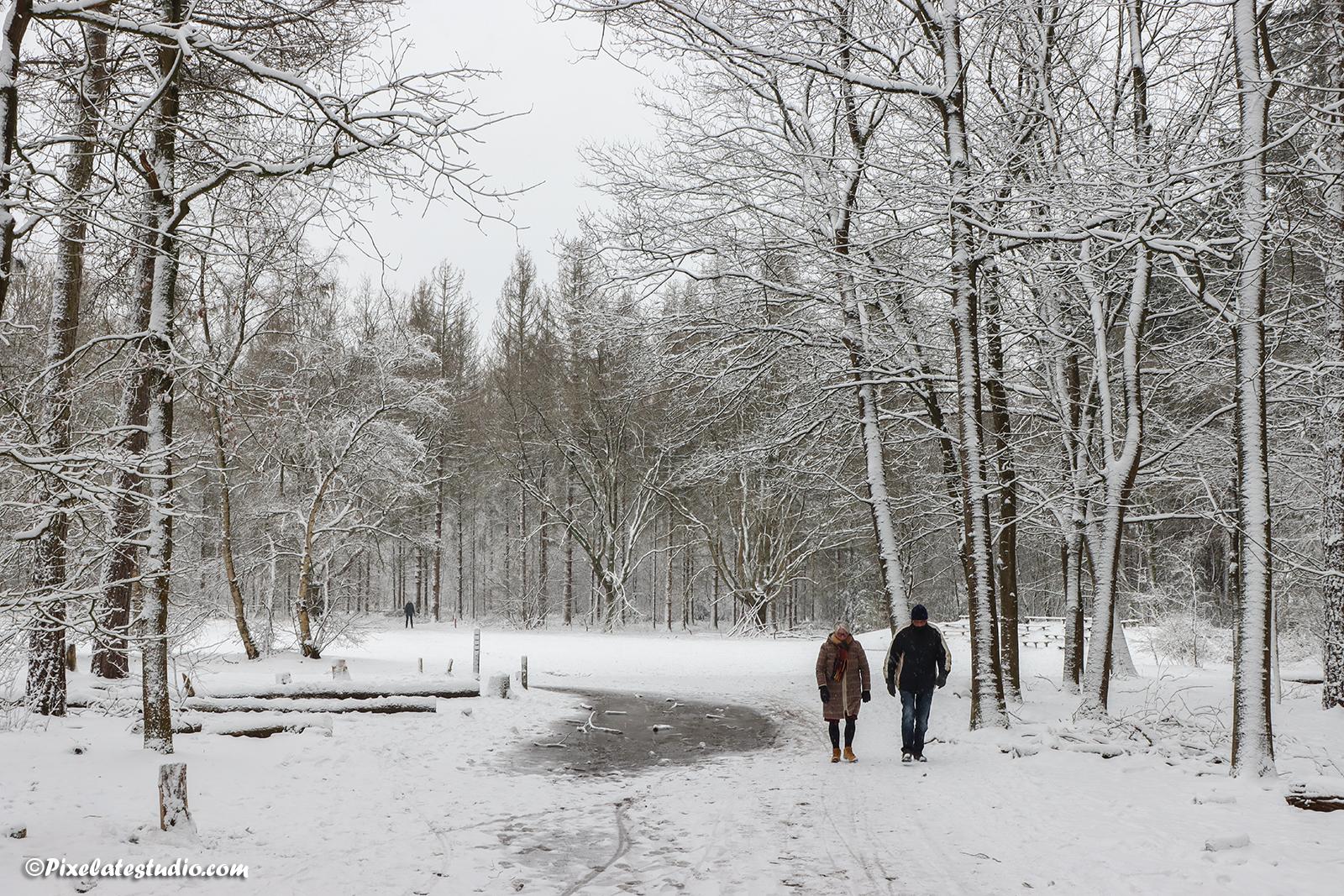 Wandelen in een met sneeuw bedekt bos