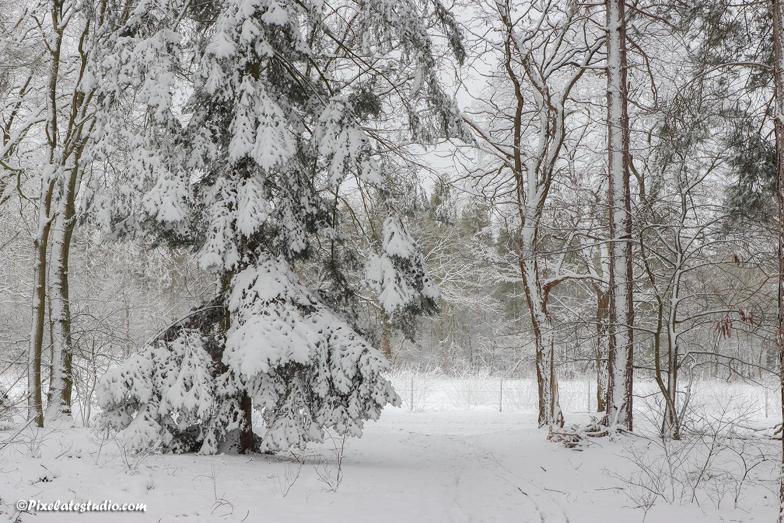 foto van bomen bedekt met verse sneeuw