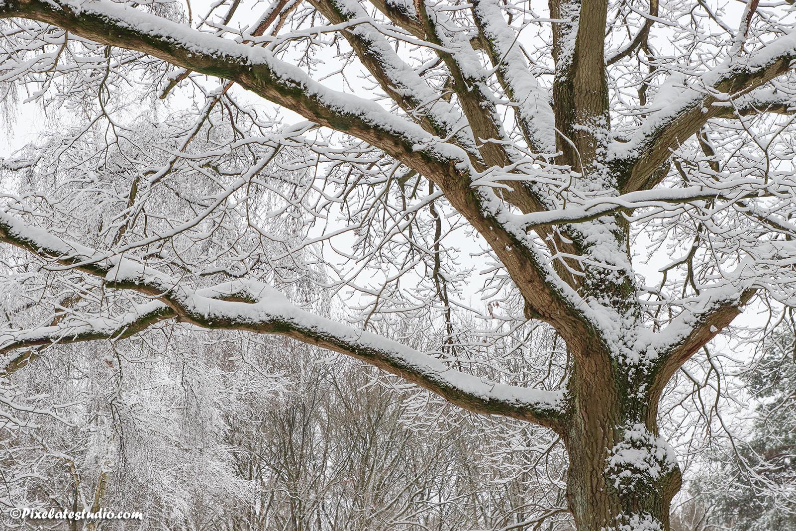 Winter foto van takken bedekt met sneeuw in het bos