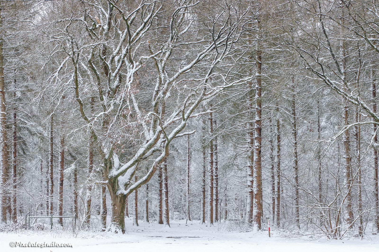 foto van met sneeuw bedekte bomen