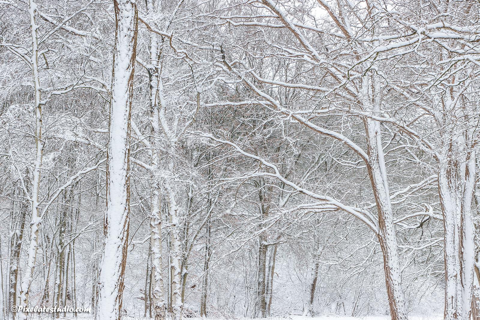high key winterfoto