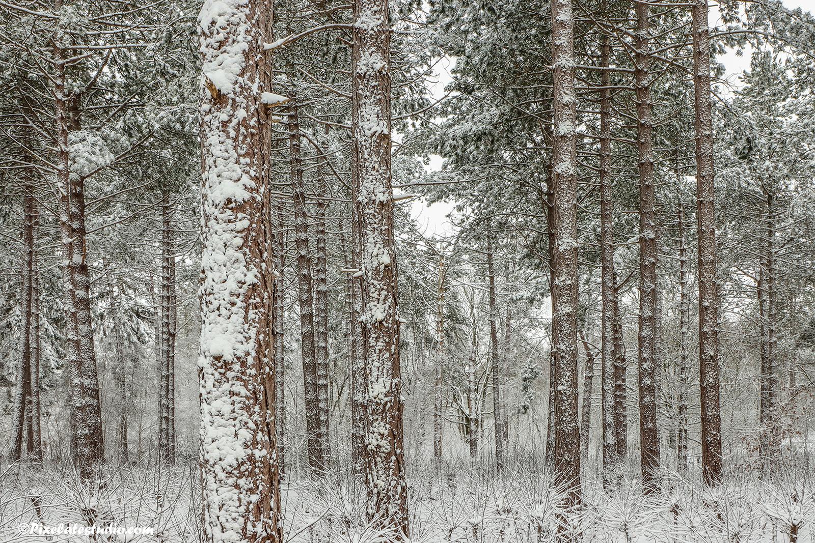 mooie foto van met sneeuw bedekte dennenbomen