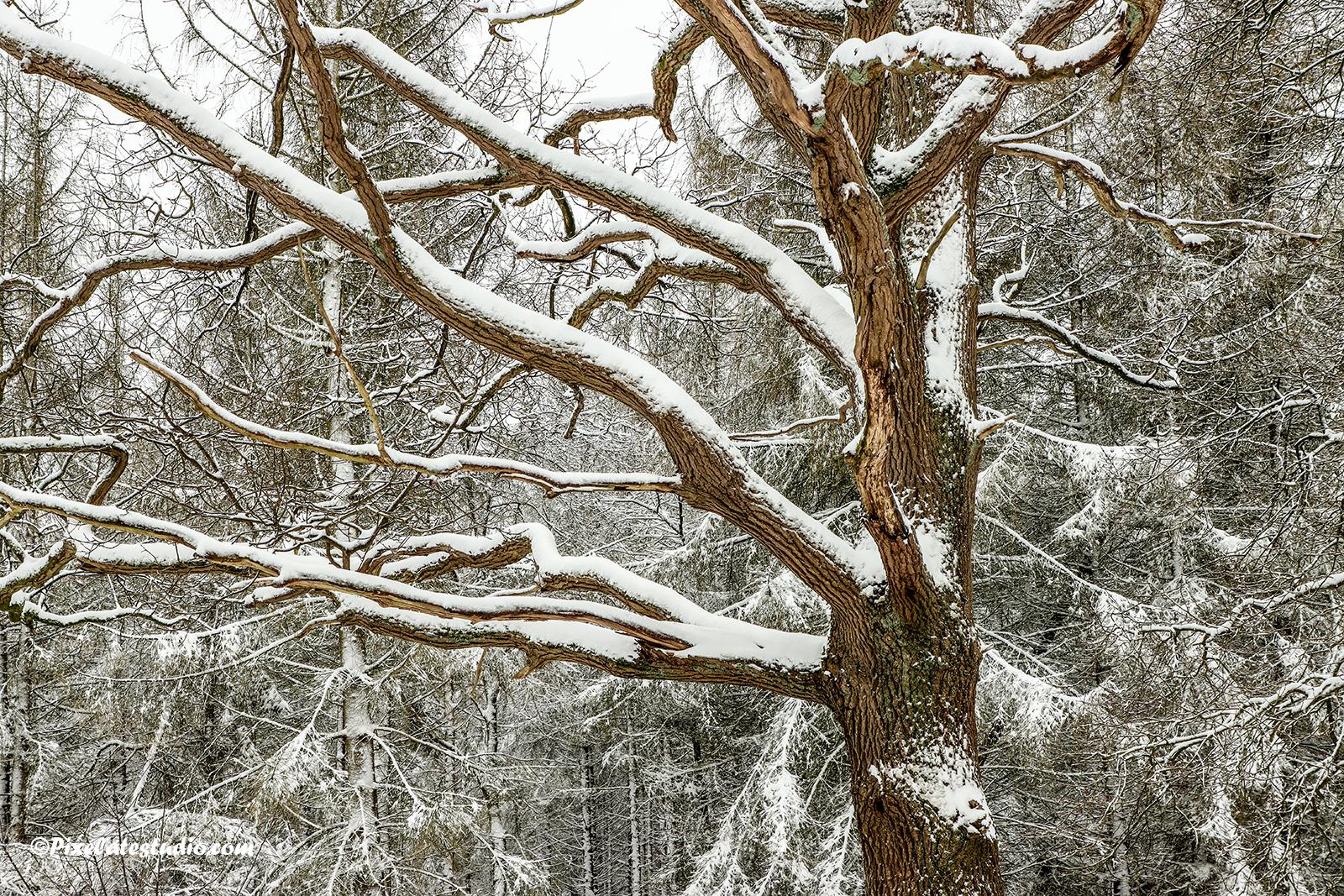 mooie close up foto van takken met sneeuw in het bos gemaakt