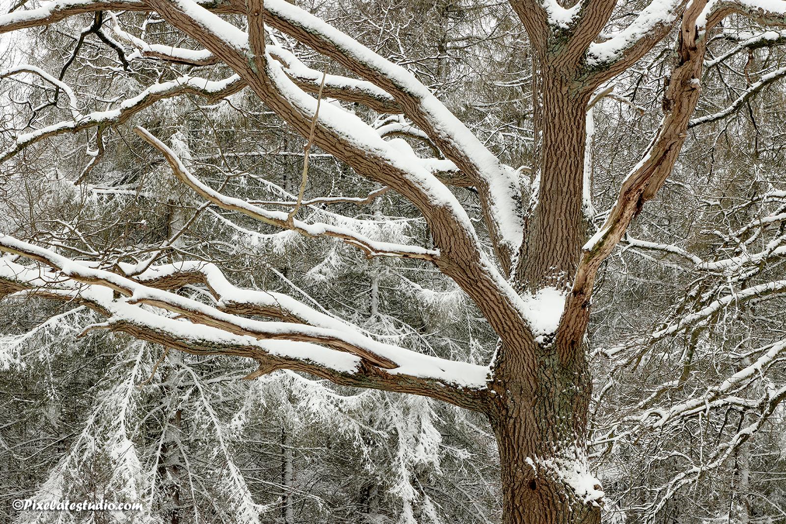 mooie foto van besneeuwde takken van een boom