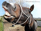 Funny Animal Background, Funny Horse Wallpaper
