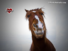 Funny horse wallpaper, funny background of a funny horse