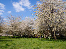 Beautiful Spring Wallpapers , Spring Backgrounds , Free Downloads
