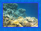 Red Sea Wallpapers , beautiful underwater wallpapers , underwater backgrounds for pc, 1024x768 resolution