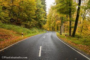 Foto weg door het bos in herfstkleuren