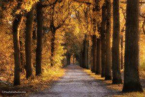 foto van het najaar in het bos