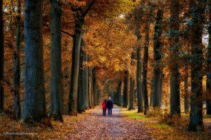 Super mooie herfstfoto genomen in het najaar, met mooi verkleurde bladeren