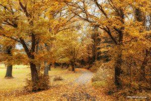 Herfstkleuren mooie herfstfoto