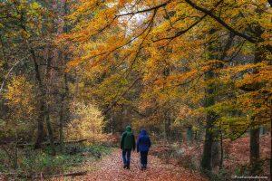 Wandelaars in het bos in herfstkleuren