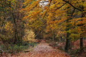 mooie foto van het najaar in het bos