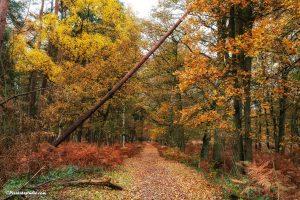 Mooie herfstfoto in het bos