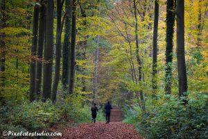 hardlopers in het bos in de herfst