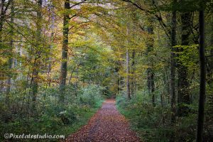 bos in herfst kleuren