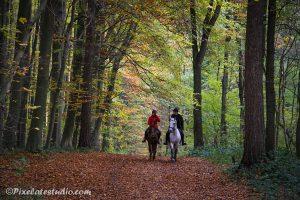 paarden in het herfst bos