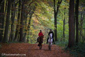 paarden in het bos