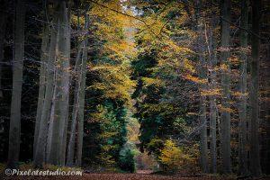 mooie herfst foto met zoomlens genomen