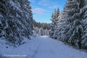 Sneeuw foto van dennnenbomen