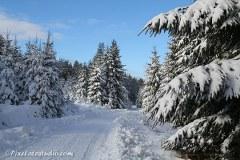 Sneeuw foto's Ardennen
