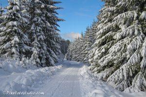 Sneeuwfoto van bos