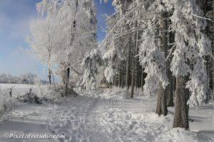 bos in sneeuw