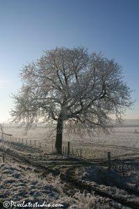 foto van boom met rijp