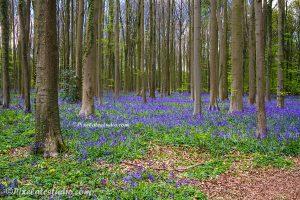 Voorjaar in het bos