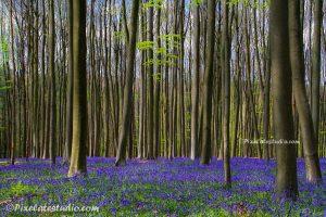 foto van het bos in bloei in het voorjaar