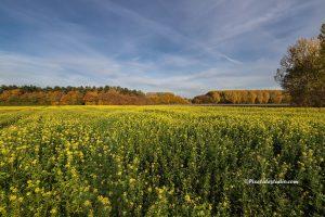Foto van koolzaad bloemen met een mooie herfst achtergrond