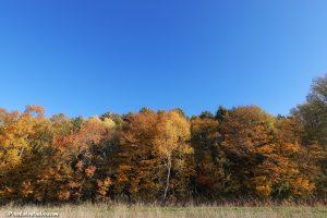 bos in herfst kleuren met mooie blauwe lucht erboven