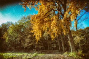 mooi bewerkte foto van bomen in het najaar