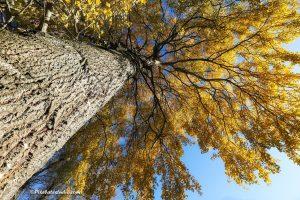 mooie foto van een boom met stam in de herfst