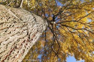 mooie foto van een grote boom met stam in de herfst
