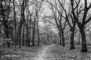 Herfst foto in zwart-wit