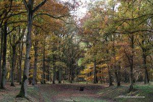 Najaarsfoto van een bos in herfstkleur