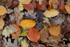 foto van herfst bladeren, mooi verkleurde bladeren