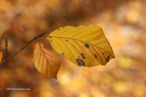 foto van een blad van een boom in de herfst close up
