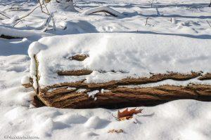 Stam van boom bedekt met sneeuw