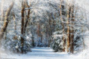 Foto van een sprookjesbos, met mooi zonlicht en vers gevallen sneeuw