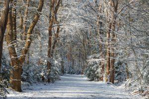 Winterfoto van een sprookjesbos, met mooi zonlicht en vers gevallen sneeuw
